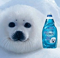 Dawn-dishwashing-liquid image superimposed on baby-seal image, to make it appear as if baby seals use Dawn, I guess. Why else?